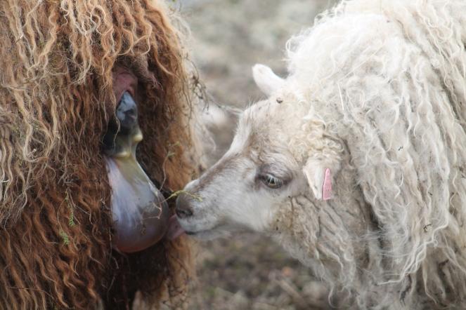 Flekka bei der Geburt von Fríða