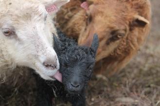 Flekka mit ihrem kuenftigen Pflegesohn und Nína, die echte Mutter