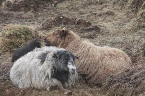 Vater Silfri mit Fríða und Nína