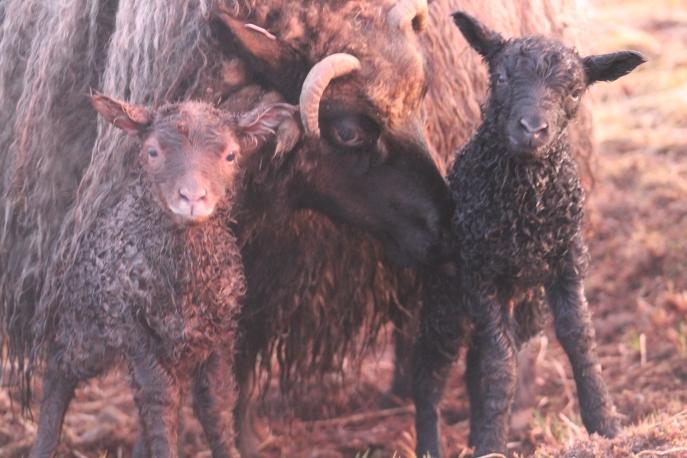 Tilda mit ihrer Tochter Ugla und ihrem Sohn