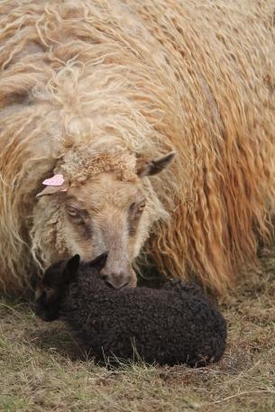Þoka (Þ = wie engl. ti-eitsch) mit ihrem 2. Sohn