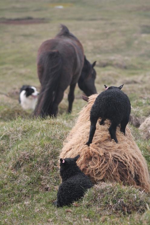 Funa mit ihren Töchtern schauen Baugur und Síríus zu